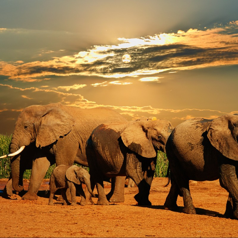 6-Night African Safari for 4