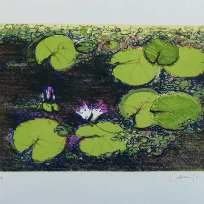 Water Lilies Lithograph by Giancarlo Cazzaniga