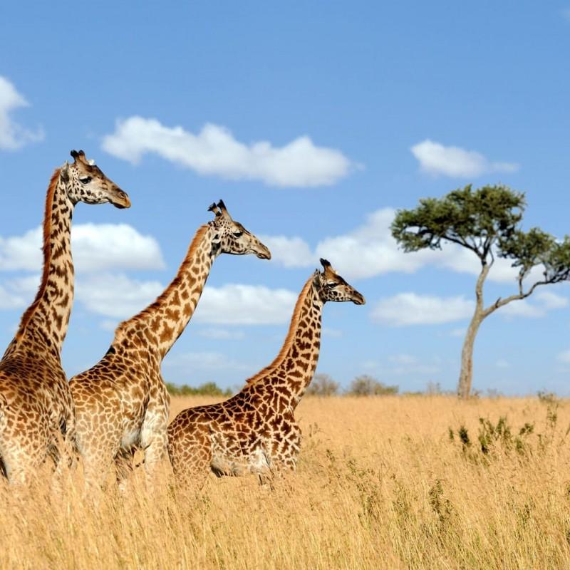 5-Night Safari in Africa for 2 People