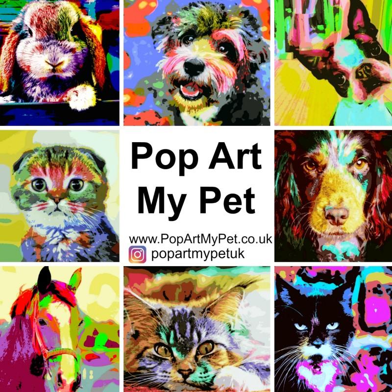 28 - POP ART MY PET Pet Photography Experience
