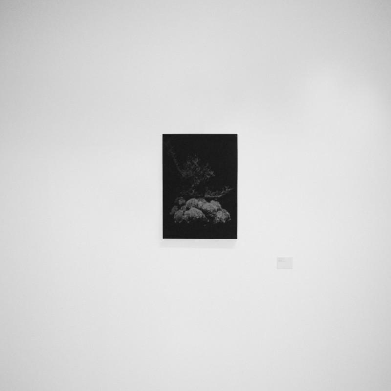 """Tokyo Flowers"" Artwork by Michel Comte"