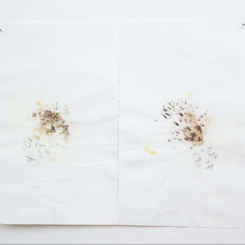 """""""Connessione"""", """"Racconti vegetali"""" Series by Cecilia Viganò"""