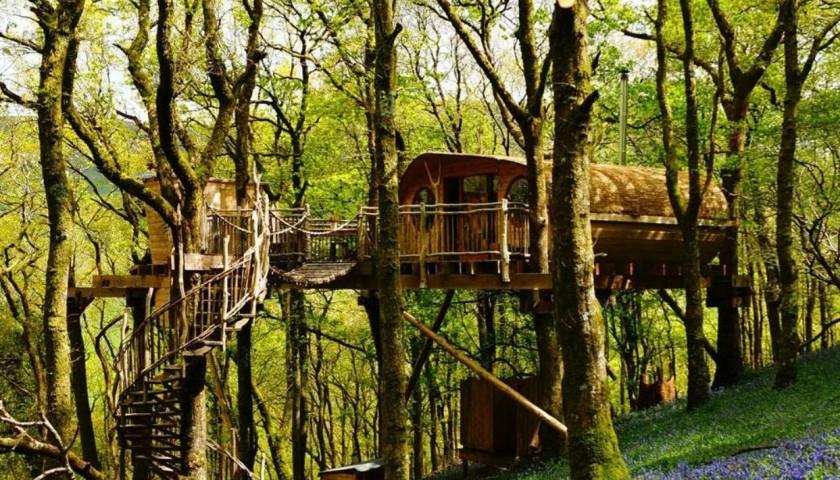 Soggiorno di 3 notti in una casa sull\'albero in Galles - CharityStars