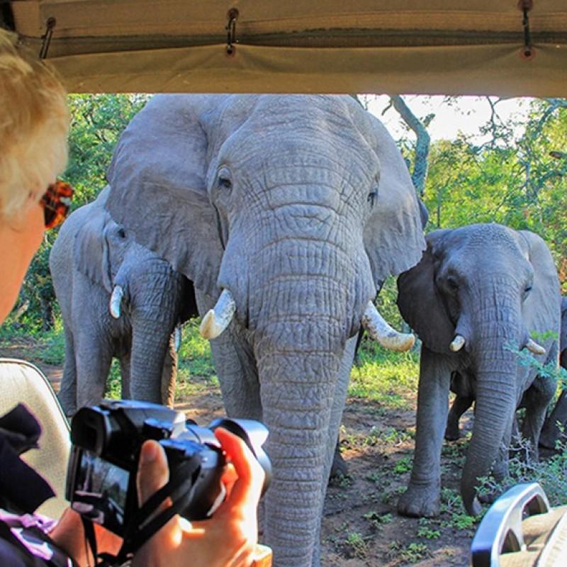 Unique Luxury 4-Night African Safari Experience