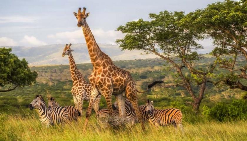 6-Night African Safari for 2