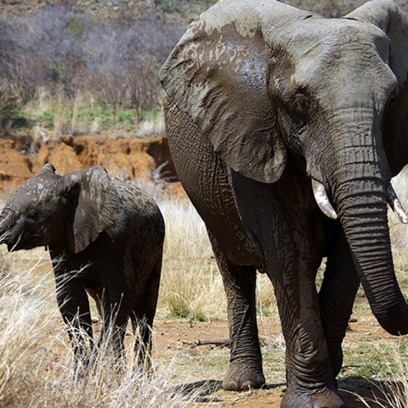Reduce Elephant-Human Conflict