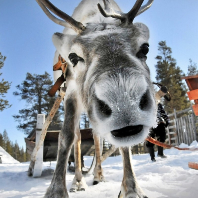 Lapland 3 Night Half Board Activities Stay In A Glass Cabin For Two With Snow Mobile Safari And Reindeer Sleigh Ride
