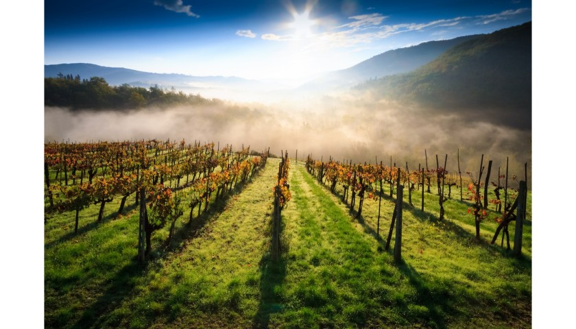 Receive an Instant Wine Cellar Full of Italian Wines