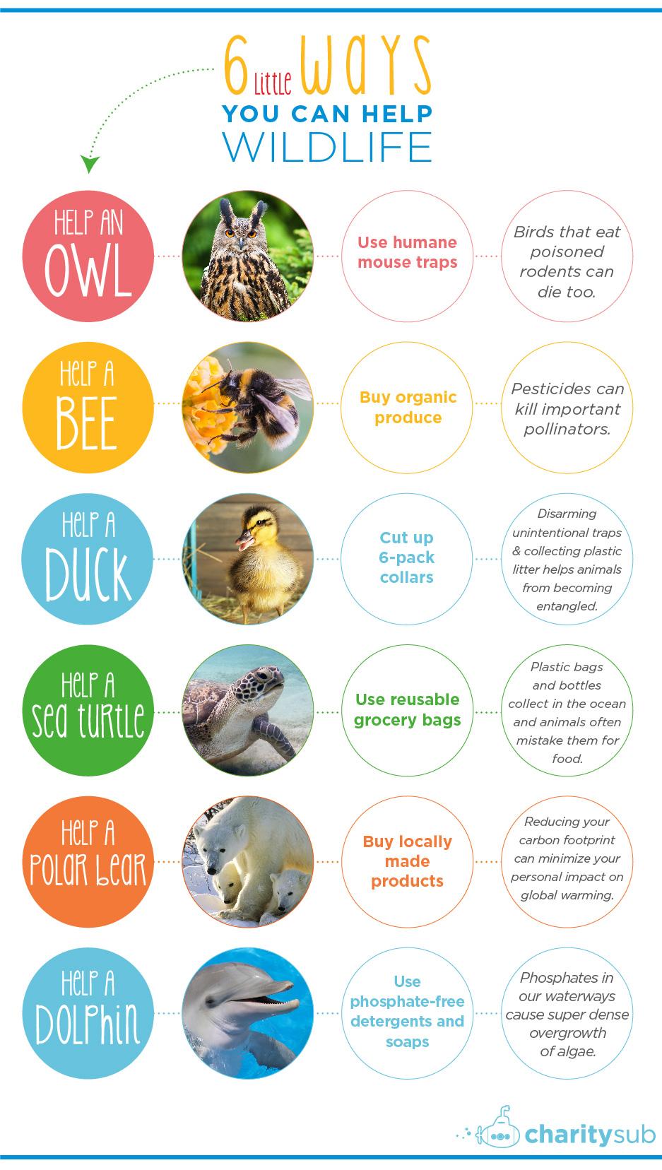 31-charitysub-wildlife_infographic