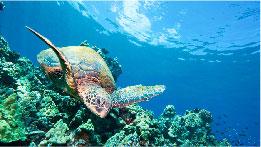 104-charitysub-coralreefs_i-reef-quest-thumb