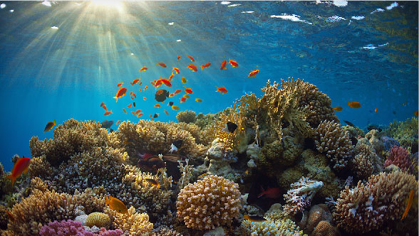 34-charitysub-coralreefs_big-photo