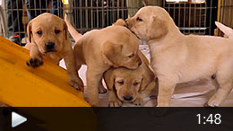 5-working-dogs_video_thumb_medium