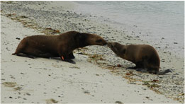 93-charitysub-wildlife_marine-mammal-thumb