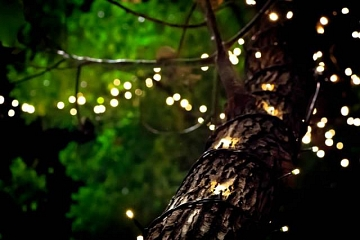 Image: Nature of Art: Films and Fireflies