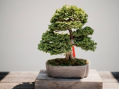 The Chattery Presents: Beginner Bonsai