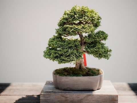 Image: The Chattery Presents: Beginner Bonsai
