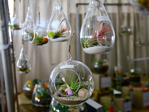 Image: Create Your Own Hanging Terrarium