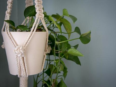 Image: Beginner Macrame: Plant Hanger