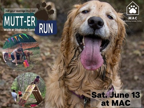 Image: 2nd Annual Not Your Average (virtual) Mutt-er Run