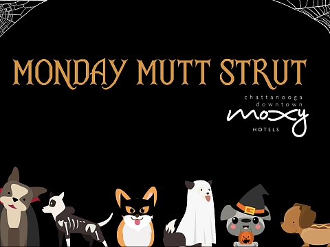 Image: Monday Mutt Strut at Moxy Nooga!