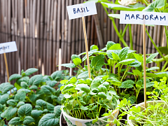 How to Grow an Herb Garden – Online Class