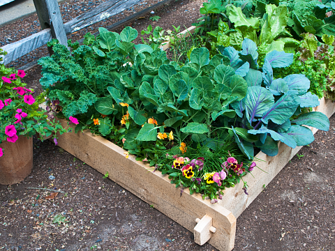Image: Raised Bed Gardening 101 – Online Class