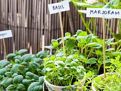 How to Grow an Herb Garden – Online Class
