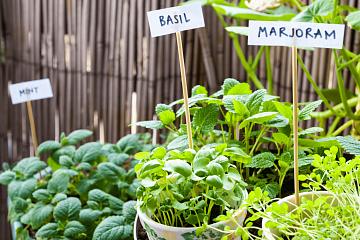 Image: How to Grow an Herb Garden – Online Class