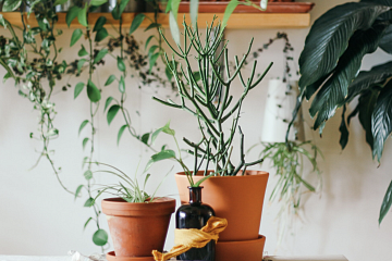 Image: Repotting Plants 101 – IN-PERSON CLASS