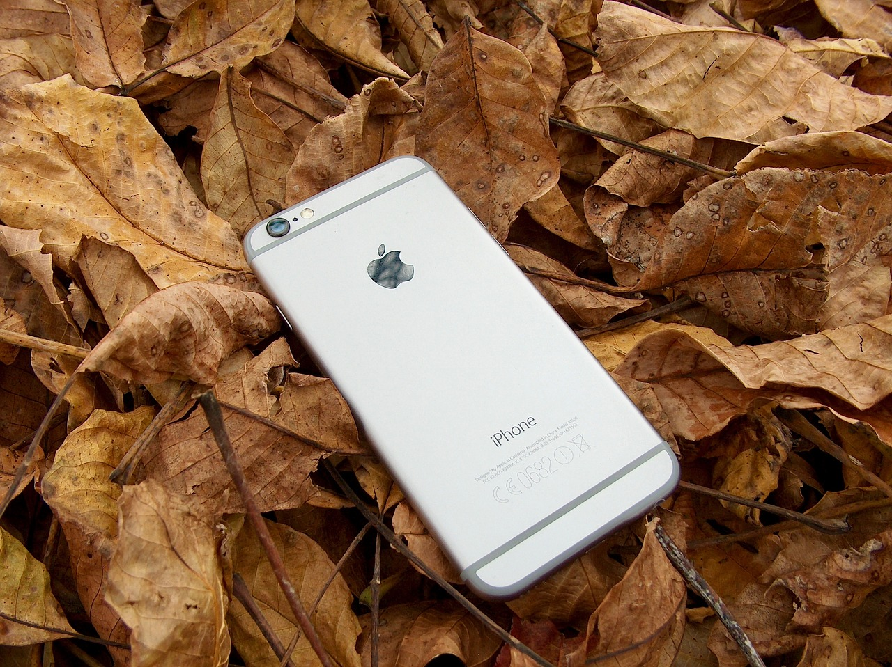Phone Nestled in Leaves