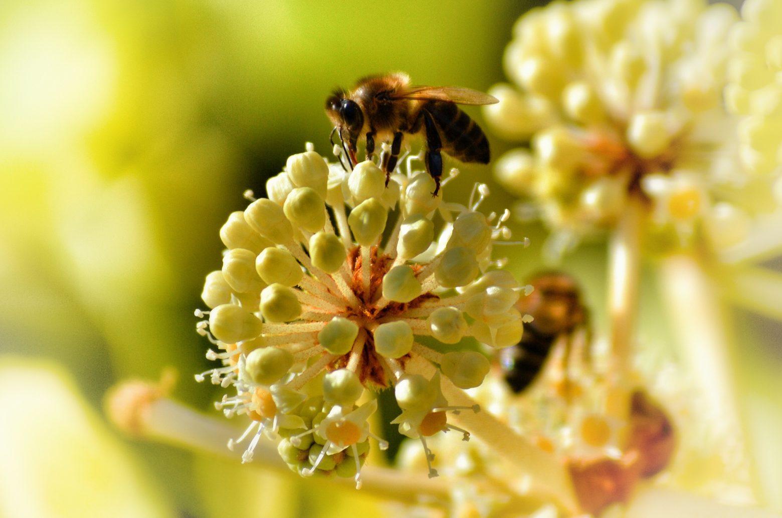 Bee zipping nectar