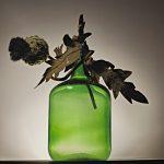 Dead plant in a bottle