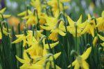 Downcast flowers