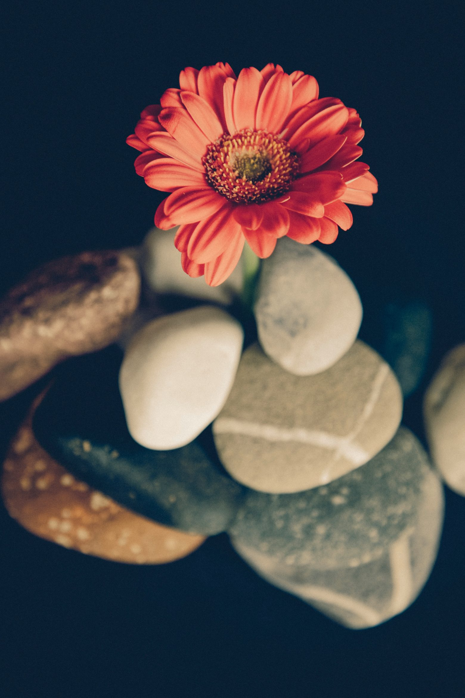 Flower in the stones