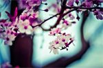 Flowers in branches