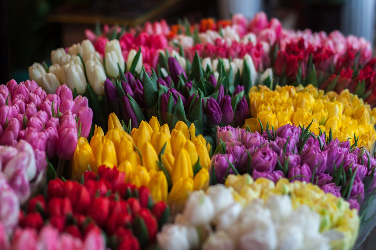 Group of colorful flowers