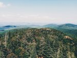 Huge Mountain Trees