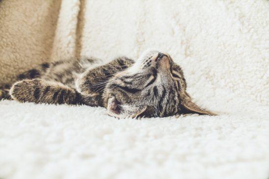Kitty sleeps in the rug