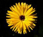 Sun like flower
