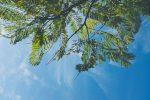 Under the tree branch