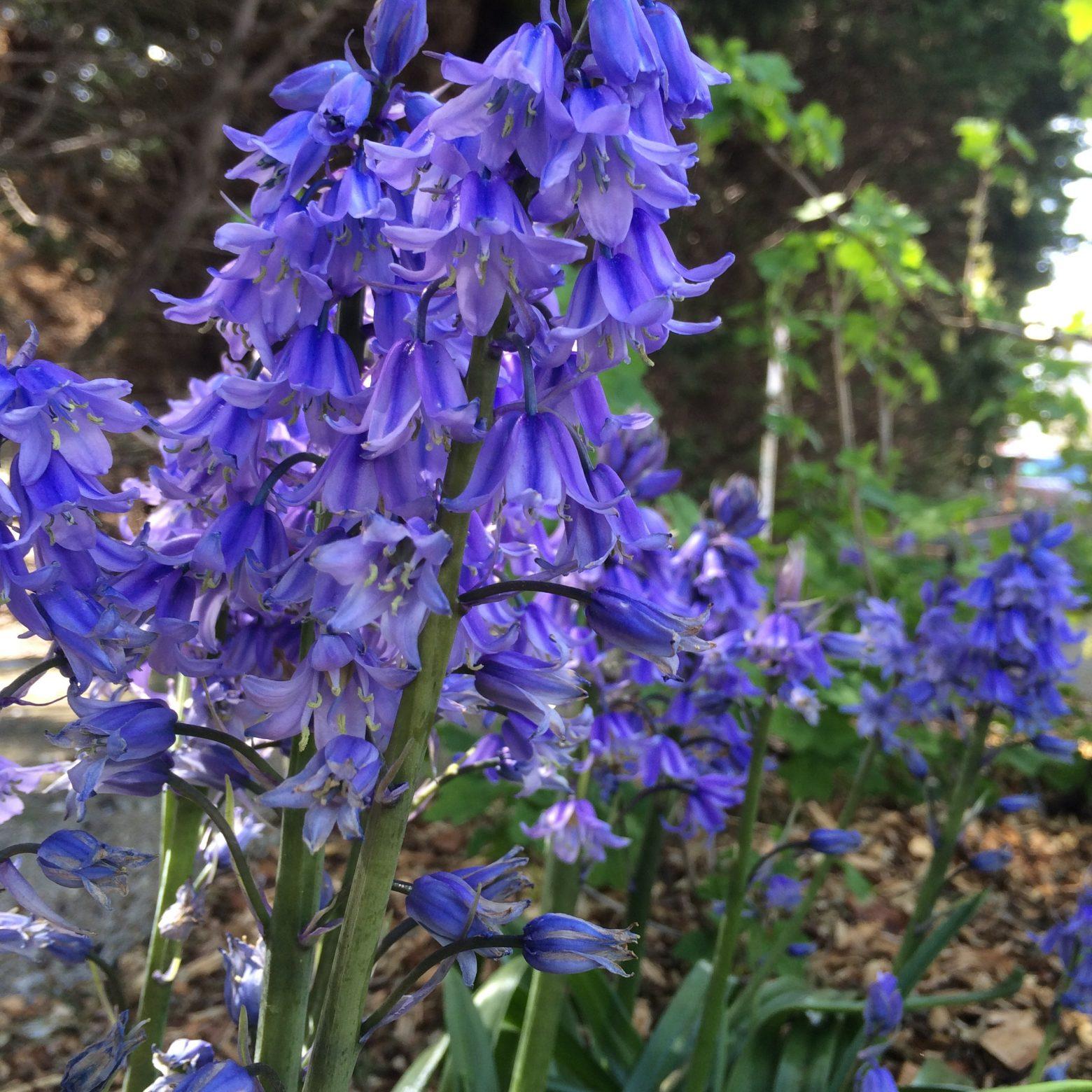 Violet lovely flowers