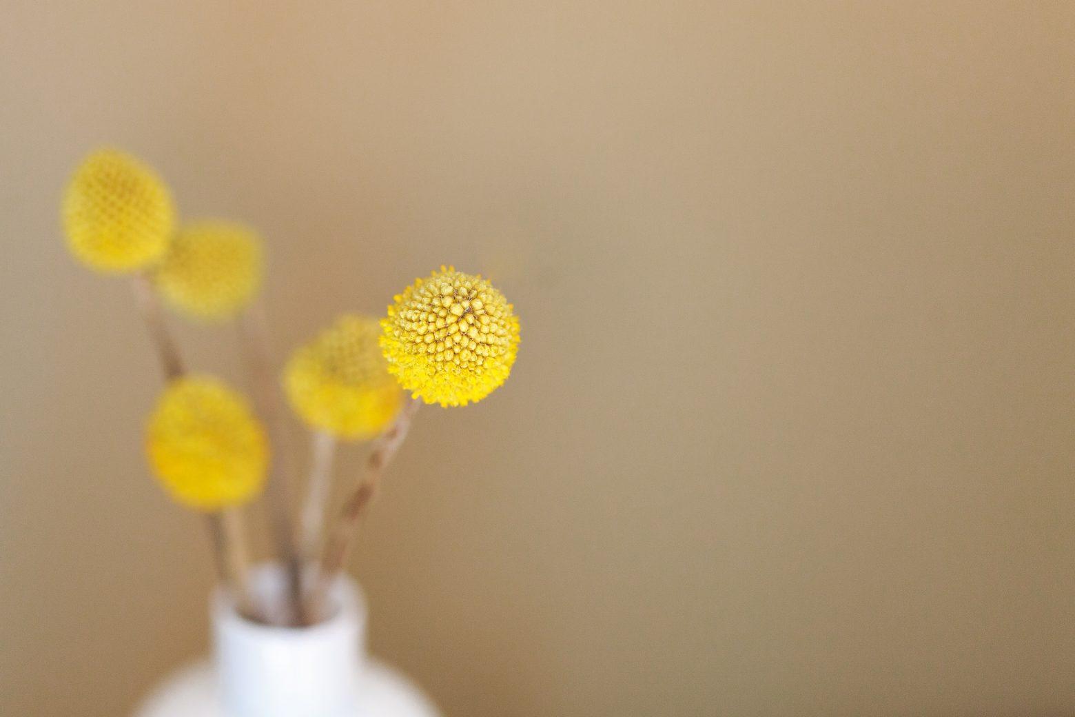Yellow lovely flower