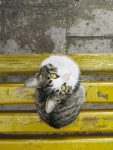 A cute cat sitting at the bench
