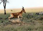 Safari's animals