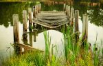 Broken wooden bridge in the lake