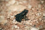 This Is Medium-Small Frog on Land