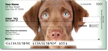 Chocolate Lab Puppydog Eyes Checks