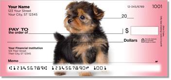 Adorable Yorkie Pup Checks