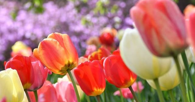 Spring Activity Checklist