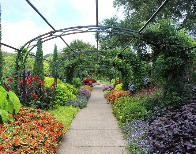 Summers at Cheekwood garden flower